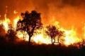 حريق هائل يلتهم اكثر من 2000 شجرة زيتون في طولكرم