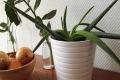 نباتات ضرورية في غرفة النوم لمحاربة نزلات البرد!