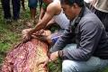 شاهد.. تمساح يعود بجثة رجل قتله قبل يوم