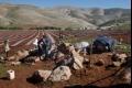 """مستعمرو الأغوار """"يؤجرون"""" لبعض الفلسطينيين قطعا من الأراضي التي احتلوها ونهبوها!"""