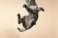 قطط بتسعة أرواح: كيف تستطيع القطة أن تقفز من أماكن مرتفعة وتهبط بأمان؟!.. بالصور والفيديو
