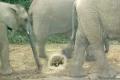 فيديو  السلحفاة الأكثر حظا… تنجو من الموت دهسا بأقدام الفيلة