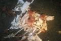 ماذا يحدث للجسم الميت في البحر؟