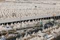 محرومون من الحج والعمرة.. السعودية تمنع قرابة 3 ملايين فلسطيني من تأدية الركن الخامس، فمن ...
