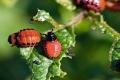 حشرات غريبة تجتاح روسيا