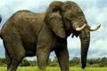 هل تعلم كيف يموت الفيل؟