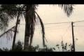 شاهد الفيديو... ظاهرة غريبة جداً... السماء تسقط عناكب في البرازيل