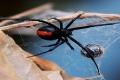 العناكب يمكنها أكل جميع البشر على وجه الأرض في عام واحد وتبقى جائعة