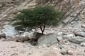 تعرف على أعشاب سيناء النادرة التي تشفي العديد من الأمراض