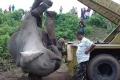 """""""بأبشع طريقة"""".. مذبحة أفيال في الهند"""