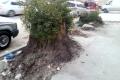 فلاتر حوارة الخضراء تُعدم، من المسؤول عن قطع أشجار الكينا المعمرة على مدخل البلدة؟