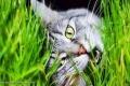 العلماء يحلون اللغز.. لماذا تأكل القطط العشب؟