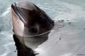 موجات صوتية لحماية الحيتان من الوقوع بشباك الصيد