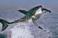 أسماك مذهلة تنطلق كالصاروخ لاصطياد الطيور.. قصة الكائنات التي ظنها صيادون من الخيال وصدمهم ذكاؤها
