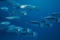 دراسة جديدة عن دور المحيطات في الكرة الأرضية