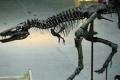الغموض مازال يلف جريمة قتل عمرها 65 مليون سنة