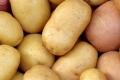 علماء: يمكن زراعة البطاطا على سطح المريخ