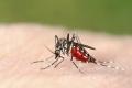 خوارزميات ضد البعوض