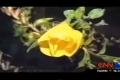 شاهد الفيديو.. معجزة ربانية زهور تتفتح لدى سماعها الأذان وتغلق لدى انتهائه