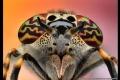 أشكال والوان لا تصدق وإبداع رباني لا متناهٍ... الحشرات كما لم تشاهدونها من قبل