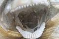 مخلوق بحري غامض في جسم كائن فضائي يخيف نيوزيلندا