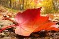 سبب سقوط أوراق الشجر في الخريف.. تعرف عليه