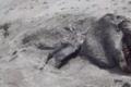 بالفيديو.. مخلوق غامض يثير الذعر على شواطئ نيوزلندا