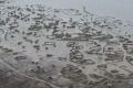 فيضانات بشرق السودان تشرد عشرات الآلاف