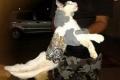 القبض على قطة تهرّب هواتف محمولة إلى السجن