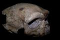 علماء يحددون عمر أقدم جمجمة بشرية مكتشفة على الأرض