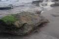 ظاهرة نادرة: صخور كبيرة تغزو شواطئ رفح وخان يونس