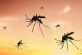 علماء بريطانيون يرصدون تريليونات الحشرات تهاجر سنوياً