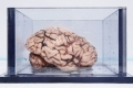 تعرف على صاحب أشهر دماغ في العالم الذي ذكر في 12 الف مقالة ...
