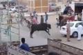 عجل يقتل جزارا ويصيب 9 مصريين قبل ذبحه في العيد