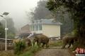 بالصور... الأفيال البرية تهاجم قرية صينية