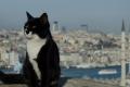 من دون القطط ستفقد إسطنبول جزءاً من روحها.. ما سر هذا الانتشار والاهتمام المبالغ به ...
