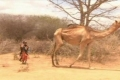 جديد دراسات طقس فلسطين: بإنتظار عودة النينو.....النينا المسؤول الأساسي عن المجاعة في الصومال والقرن الافريقي