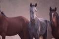 بالفيديو.. قناة تليفزيونية ترصد الوحشية مع الخيول قبل ذبحها في بريطانيا
