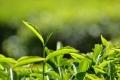 هل النبات يرى ويسمع ويفكر مثل الانسان ؟