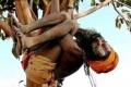 رجل يعيش 9 أشهر فوق شجرة بانتظار اعتذار زوجته على خيانته