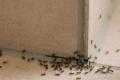 خلطات طبيعية تخلصك من النمل والحشرات نهائياً في المنزل!