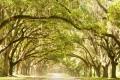 أكثر الغابات جمالاً في العالم