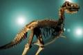 الديناصورات أخف وزنا عما اعتقد العلماء
