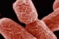 """القضاء على البكتيريا """"الخارقة"""".. بفيروسات """"تأكلها"""""""