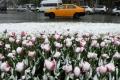 ثلوج الصيف في موسكو تصدم سكانها (صور+فيديو)