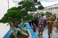 سرقوا شجرة نادرة عمرها 400 عام