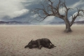 الانقراض الجماعي السادس بتاريخ الأرض سيكون خلال 50 سنة