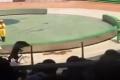 بالفيديو:سيرك مأساوي لدبٍّ يفلت من عقاله ويفترس قرداً