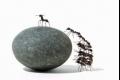 ما هي عقوبة الكذب عند النمل ؟