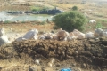 مزارعون من جنوب الخليل يعيدون الحياة لأراضيهم الزراعية
